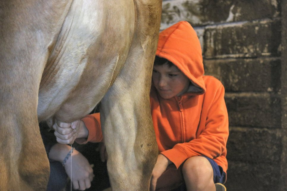 The third-grade farm trip during the farming main lesson block provides many opportunities for the students to work with animals in ways most of the students have never experienced.